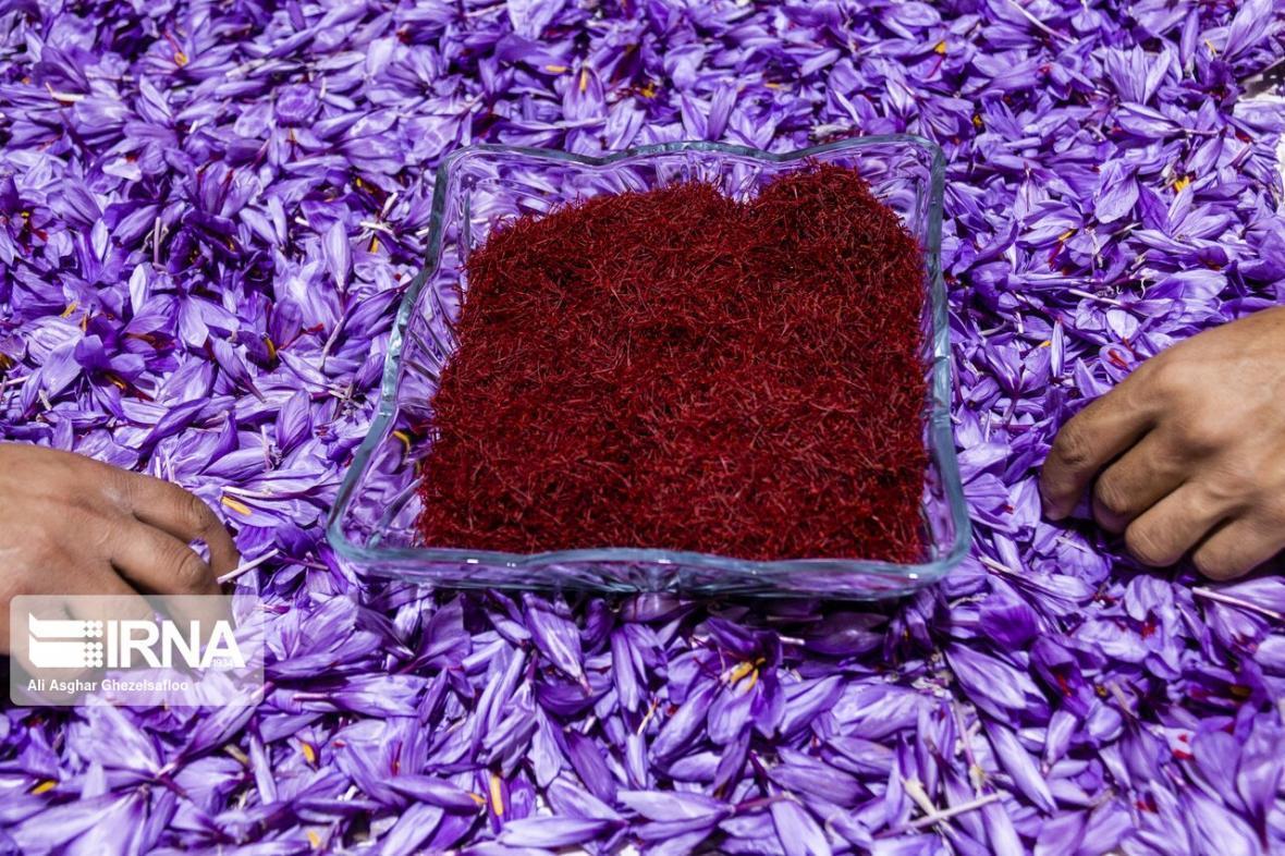 خبرنگاران خرید حمایتی زعفران در خراسان رضوی به طور رسمی آغاز شد
