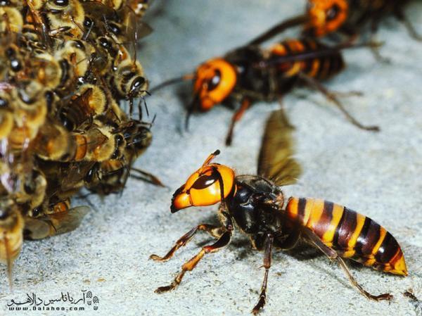 مواظب گزش حشرات در سفر باشید